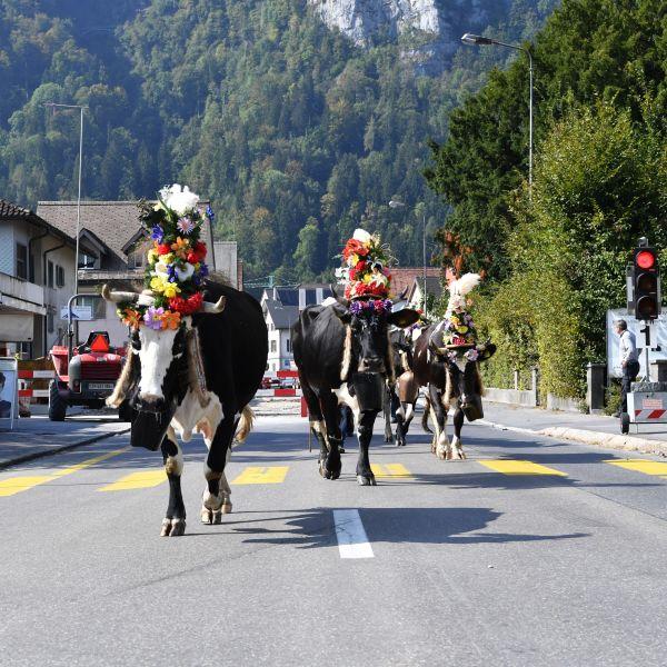 Alpabzug Näfels und Klöntal